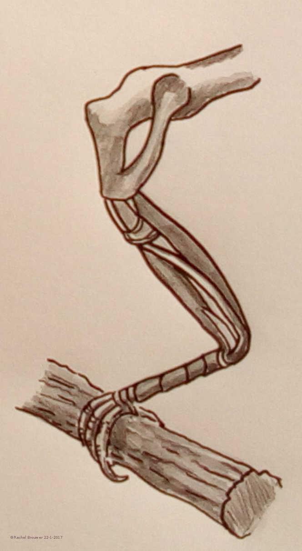 adaptação das aves iii as pernas e patas educação ambiental n a