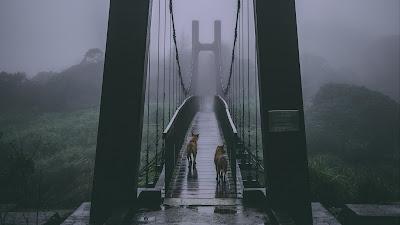Puente de madera en campo con niebla y lluvia