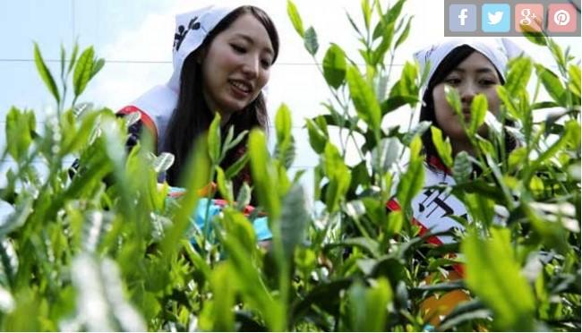 Luar Biasa: Mahasiswi UGM Ciptakan Pasta Gigi Berbahan Daun Teh Hijau