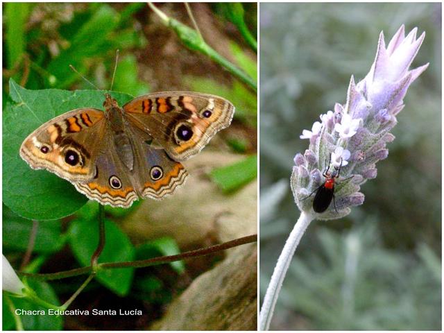 La variedad de insectos es asombrosa - Chacra Educativa Santa Lucía