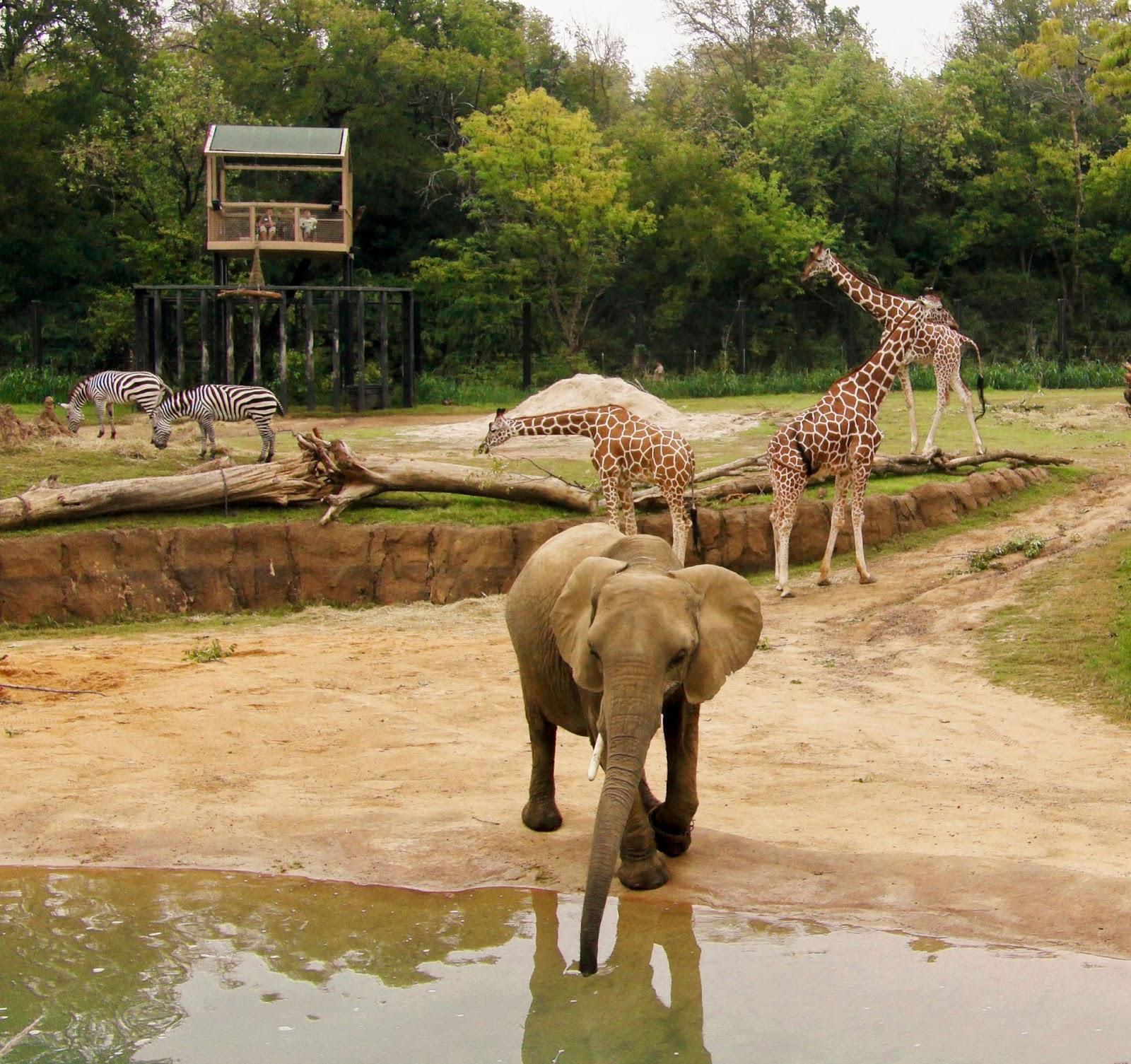 Dallas Zoo S Giants Of The Savanna Named 3 Zoo Habitat In