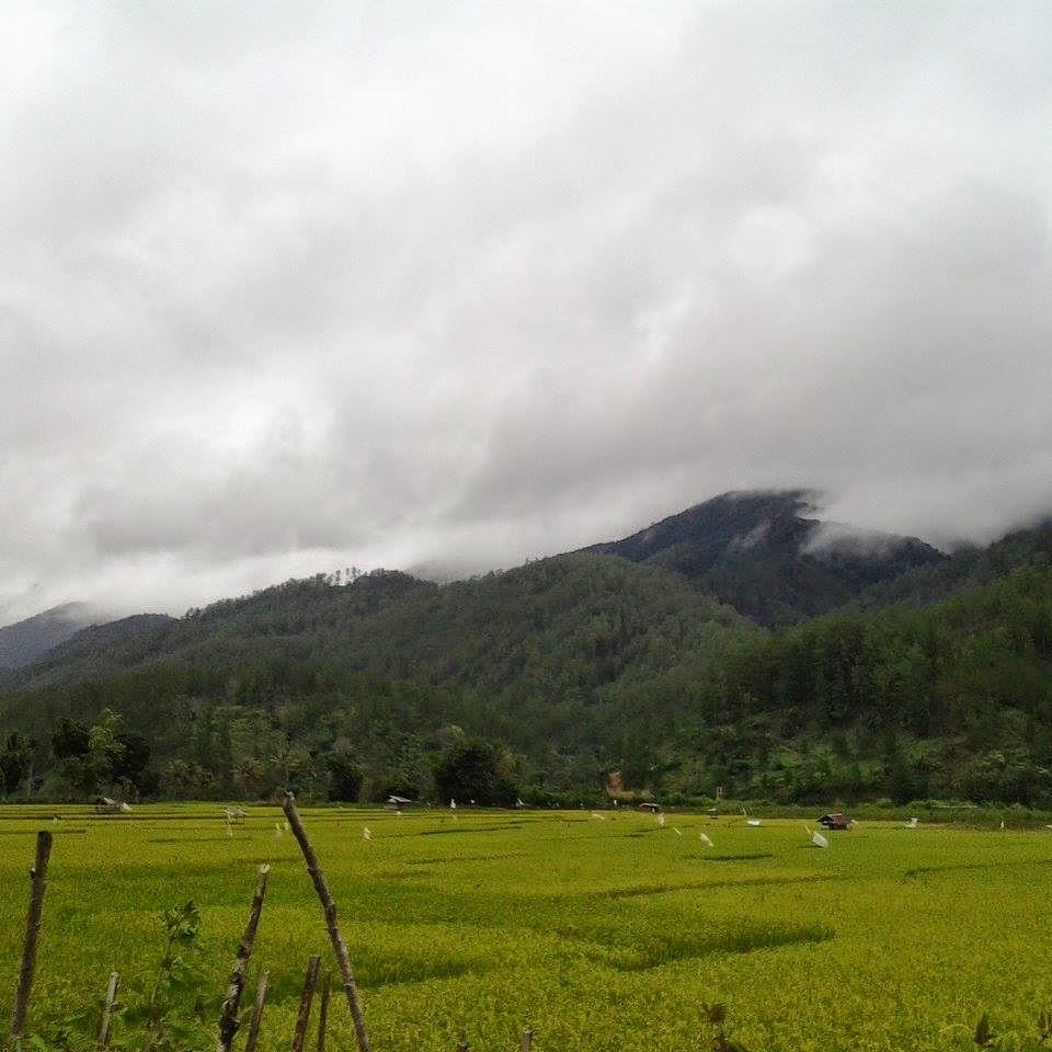 Gayo Lues: Surga Bernama Negeri Seribu Bukit