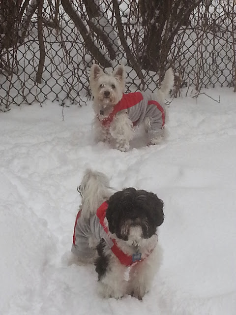 Cachorros na neve