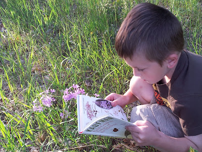 Top Nature Study Series and Field Guides for all Ages {The Unlikely Homeschool}