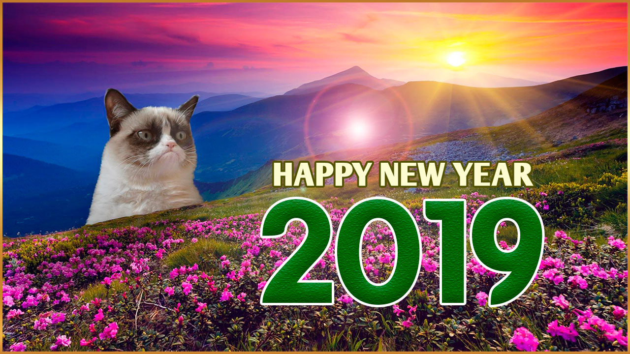 cat meme happy new year 2019