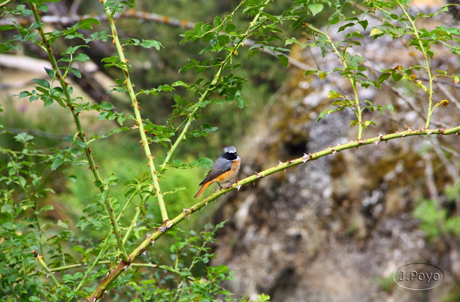 Parque Natural del Río Lobos