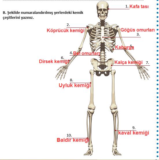 6. Sınıf Fen Bilimleri MEB Yayınları 58. Sayfa Cevapları
