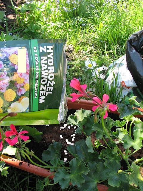 kwiaty do donic, kwiaty w donicach, ogród przydomowy, ogród za grosze