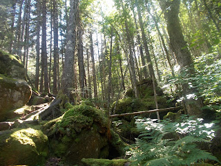 Forêt, rochers mousseux, Vallée-Bras-du-Nord, l'été