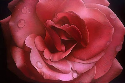 Pintura de una rosa