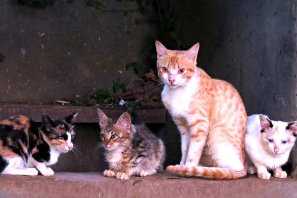 bandung cats