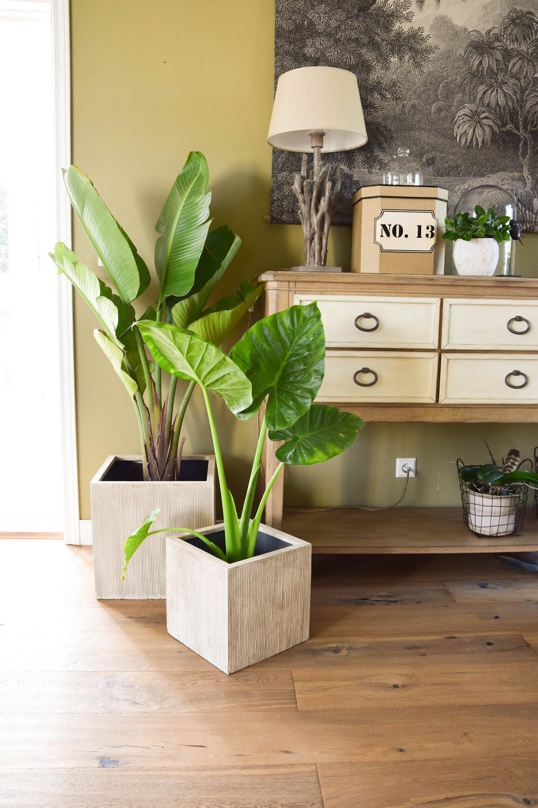 Botanical Style und neue Deko fürs Wohnzimmer mit Übertöpfen von VIVANNO. Dekoideen, Deko, Dekoration, Interior, Blumenkübel, Blumentopf