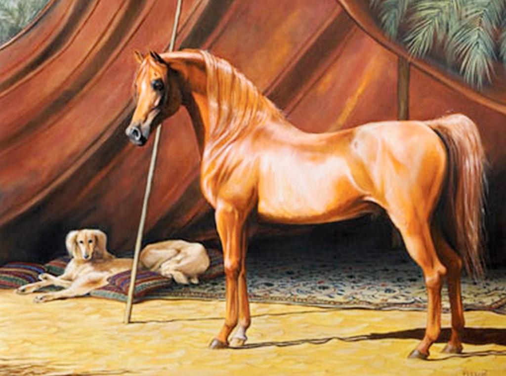 Pintura Moderna y Fotografía Artística : CABALLO ARABE