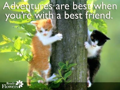cat quotes adventures are best when you're with a best friend.
