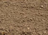 Sarden mengandung Cacing