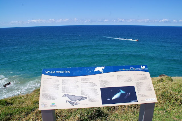 Whale Watching Port Macquarie
