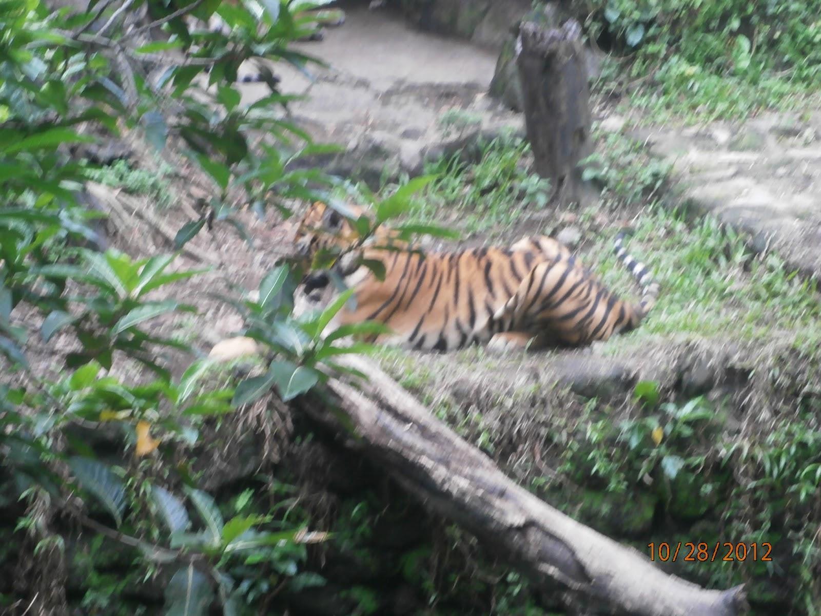 Manila Zoo Entrance Fee 2012 Schedule Maps Website