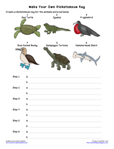 Collection Insect Dichotomous Key Worksheet Photos - Studioxcess