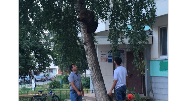 По улицам в Башкирии разгуливал медвежонок