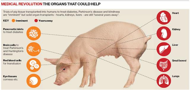 10 Fakta Babi Ini Bikin Kamu Jijik! Pantas Saja Jika Allah SWT Mengharamkannya