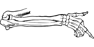 Skeleton arm pointing