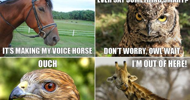 Funny Zoo Memes : Funny animals meme