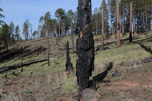 a blaze that is partly made distinct by the fire and partly burned away