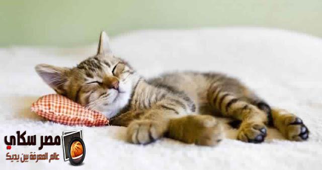 ماهى أهم الحالات المرضية المنتشرة بالقطط Pathological cases in cats؟