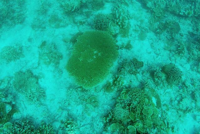 Un coral gigantesco en el fondo del mar en Gili Trawangan