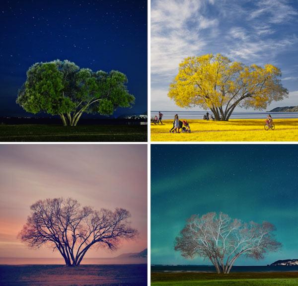 Fotógrafo analiza por años como historias se desarrollan alrededor de un solitario Árbol Broccoli