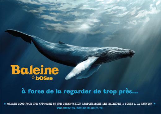Guigui in Run Baleines