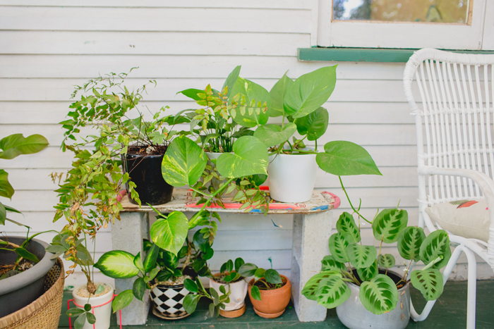 house plants on verandah