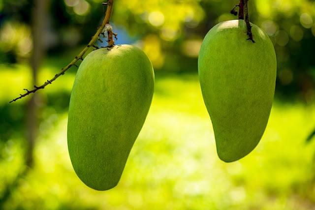 Ini 5 Manfaat dari Makan Mangga yang Belum Matang