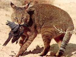 Jual Kucing Hutan (Liar) Jenis Kucing Hutan,  Harga Kucing Hutan (Liar) Jenis Kucing Hutan,  Toko Kucing Hutan (Liar) Jenis Kucing Hutan,  Diskon Kucing Hutan (Liar) Jenis Kucing Hutan,  Beli Kucing Hutan (Liar) Jenis Kucing Hutan,  Review Kucing Hutan (Liar) Jenis Kucing Hutan,  Promo Kucing Hutan (Liar) Jenis Kucing Hutan,  Spesifikasi Kucing Hutan (Liar) Jenis Kucing Hutan,  Kucing Hutan (Liar) Jenis Kucing Hutan Murah,  Kucing Hutan (Liar) Jenis Kucing Hutan Asli,  Kucing Hutan (Liar) Jenis Kucing Hutan Original,  Kucing Hutan (Liar) Jenis Kucing Hutan Jakarta,  Jenis Kucing Hutan (Liar) Jenis Kucing Hutan,  Budidaya Kucing Hutan (Liar) Jenis Kucing Hutan,  Peternak Kucing Hutan (Liar) Jenis Kucing Hutan,  Cara Merawat Kucing Hutan (Liar) Jenis Kucing Hutan,  Tips Merawat Kucing Hutan (Liar) Jenis Kucing Hutan,  Bagaimana cara merawat Kucing Hutan (Liar) Jenis Kucing Hutan,  Bagaimana mengobati Kucing Hutan (Liar) Jenis Kucing Hutan,  Ciri-Ciri Hamil Kucing Hutan (Liar) Jenis Kucing Hutan,  Kandang Kucing Hutan (Liar) Jenis Kucing Hutan,  Ternak Kucing Hutan (Liar) Jenis Kucing Hutan,  Makanan Kucing Hutan (Liar) Jenis Kucing Hutan,  Kucing Hutan (Liar) Jenis Kucing Hutan Termahal,  Adopsi Kucing Hutan (Liar) Jenis Kucing Hutan,  Jual Cepat Kucing Hutan (Liar) Jenis Kucing Hutan,  Kucing Hutan (Liar) Jenis Kucing Hutan  Jakarta,  Kucing Hutan (Liar) Jenis Kucing Hutan  Bandung,  Kucing Hutan (Liar) Jenis Kucing Hutan  Medan,  Kucing Hutan (Liar) Jenis Kucing Hutan  Bali,  Kucing Hutan (Liar) Jenis Kucing Hutan  Makassar,  Kucing Hutan (Liar) Jenis Kucing Hutan  Jambi,  Kucing Hutan (Liar) Jenis Kucing Hutan  Pekanbaru,  Kucing Hutan (Liar) Jenis Kucing Hutan  Palembang,  Kucing Hutan (Liar) Jenis Kucing Hutan  Sumatera,  Kucing Hutan (Liar) Jenis Kucing Hutan  Langsa,  Kucing Hutan (Liar) Jenis Kucing Hutan  Lhokseumawe,  Kucing Hutan (Liar) Jenis Kucing Hutan  Meulaboh,  Kucing Hutan (Liar) Jenis Kucing Hutan  Sabang,  Kucing Hutan (Liar) Jenis Kucing Hutan  Su