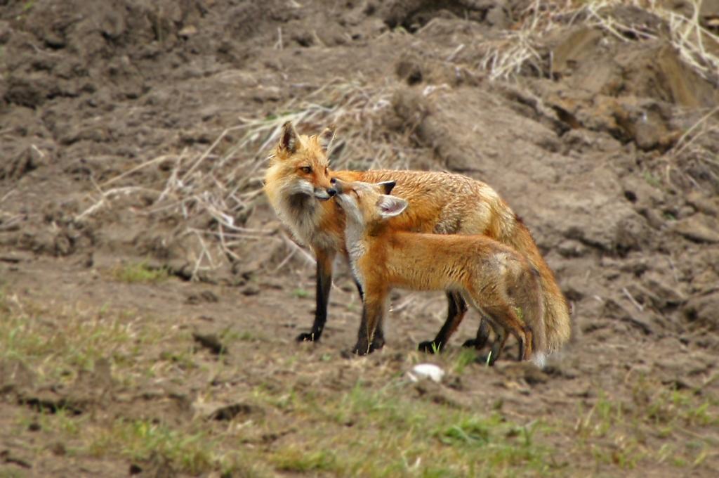 Favorite Wildlife Photos of 2012