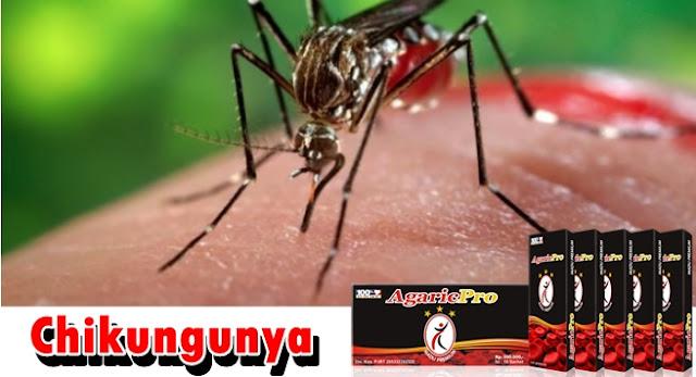 Obat Chikungunya Tradisional Resep Dokter