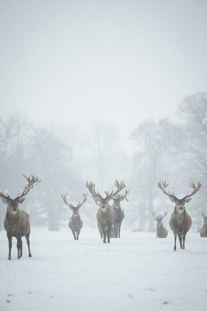 zimni obdobi