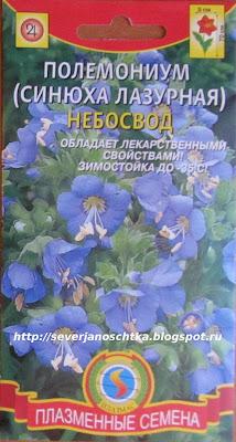 синюха голубая - яркий многолетник