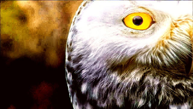 One Eye of the Owl