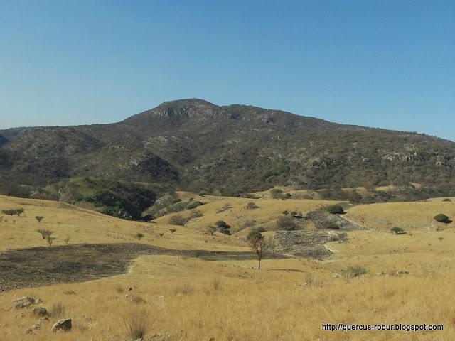 El arroyo de la Soledad es alimentado por el Cerro Jacal de Piedra
