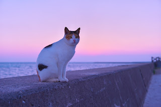 Cat by the sea at twilight. Image via Adobe Stock.