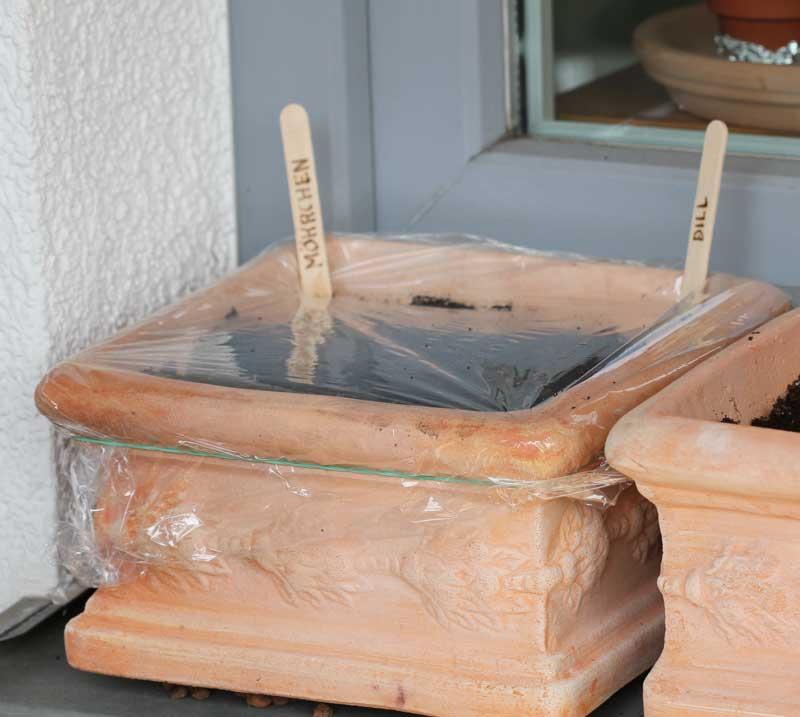 mein balkon aufzucht kleine gew chsh user. Black Bedroom Furniture Sets. Home Design Ideas