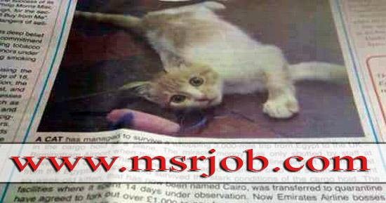 القطة كايرو , انجلترا , الامارات , تبنى , طيارة , مطار القاهرة , ملاحظة الطبية