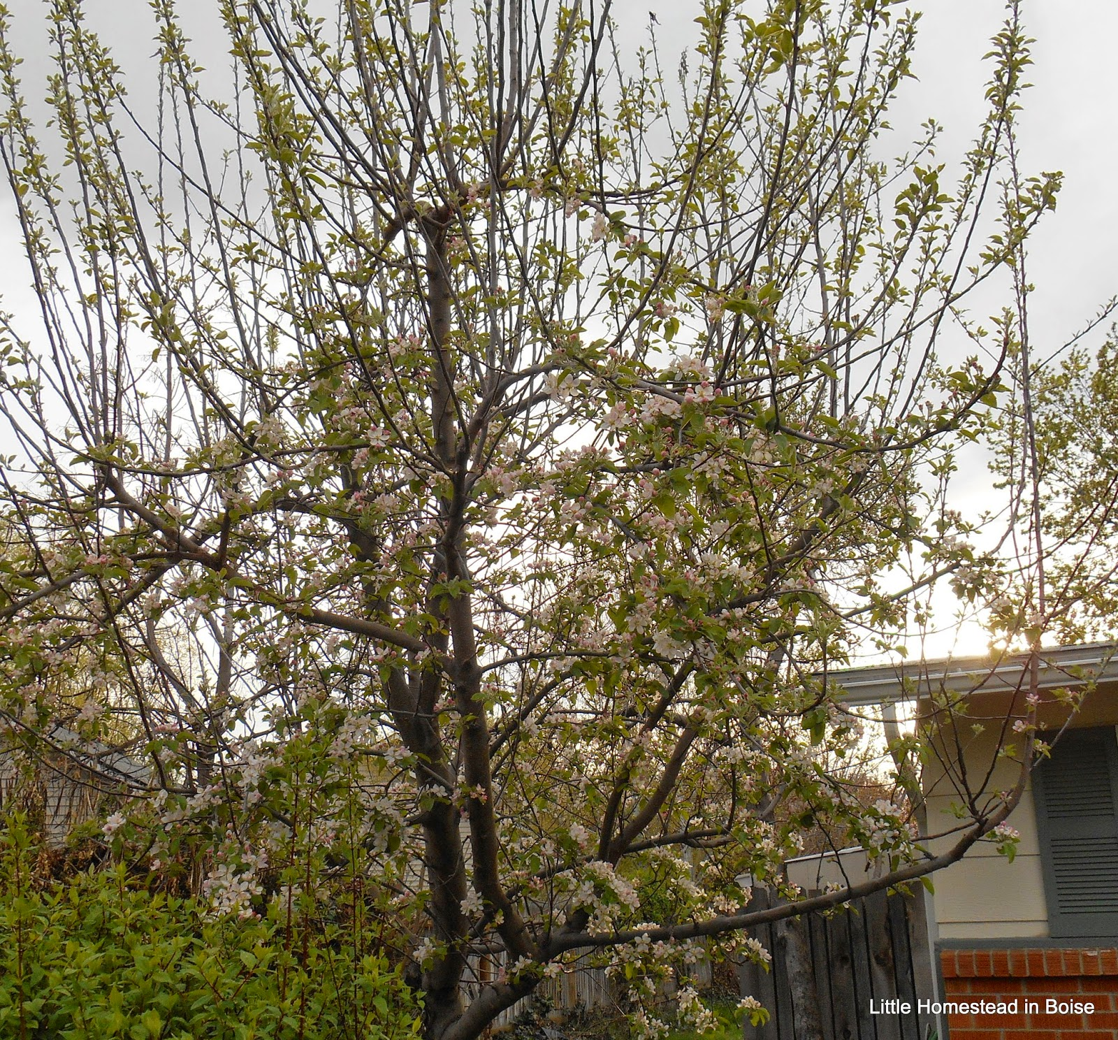 Little Homestead in Boise: Spring Has Sprung! Food Storage Re-Do ...