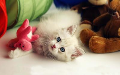a-lovely-cat-kitten-teddybear-imgs