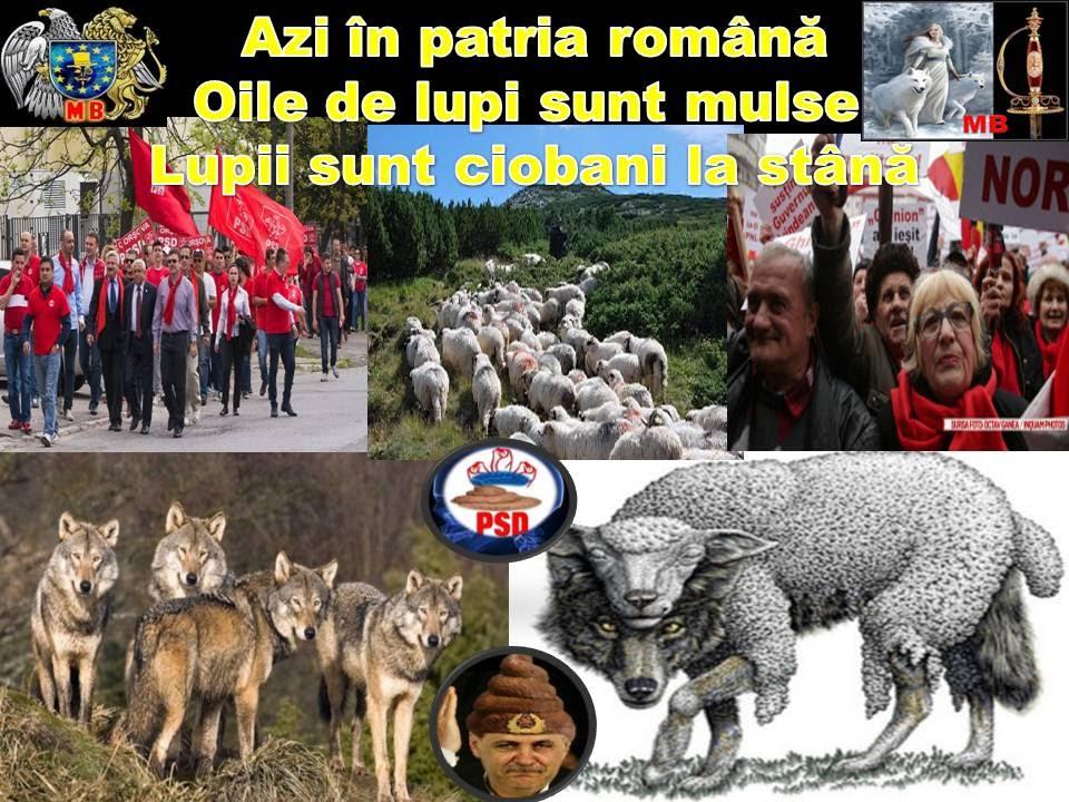în ţara unde-s `nalţi stejarii azi lupii sunt ciobani la stână iar turma o conduc măgarii LUPI%2BCIOBANI%2BLA%2BSTANA