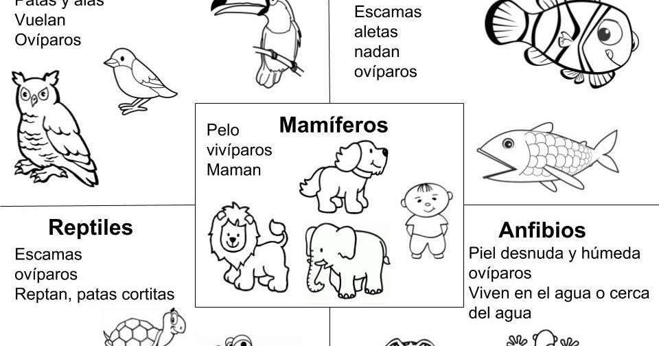 Maestra de Primaria: Ficha para colorear los 5 grupos de animales ...