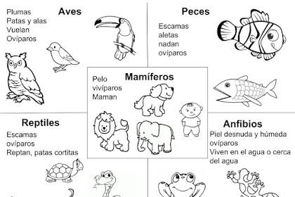 Dibujos De Animales Anfibios Para Colorear