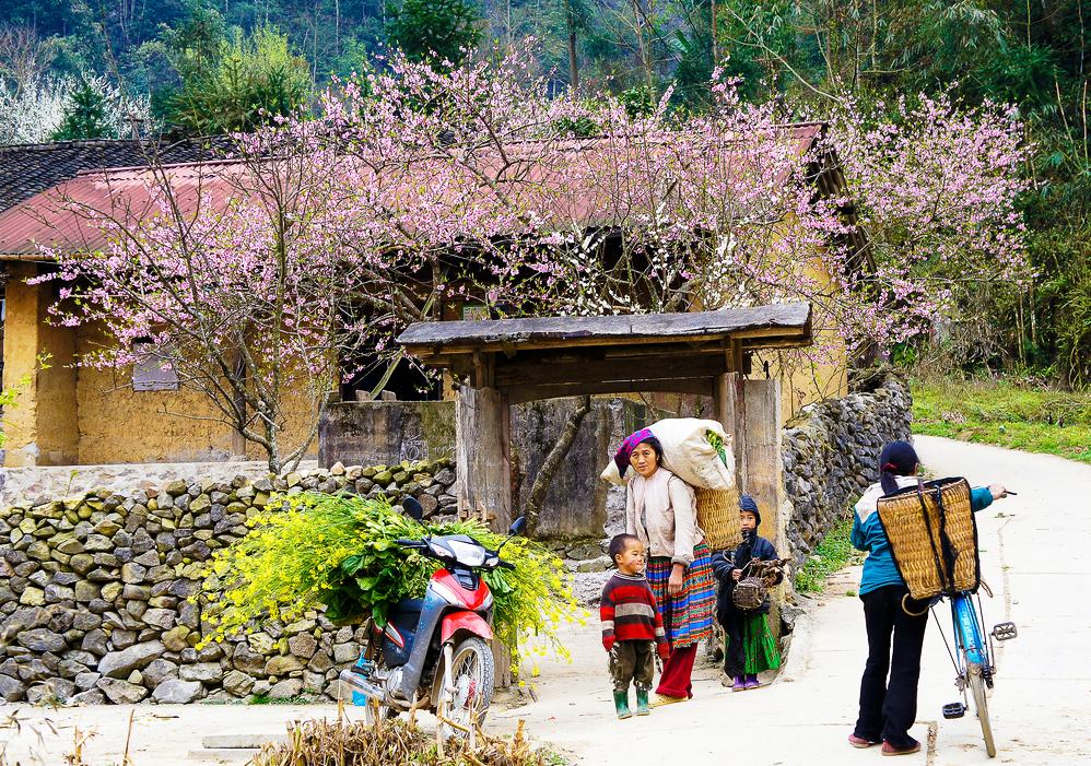 Nên đi du lịch Hà Giang vào mùa nào đẹp nhất