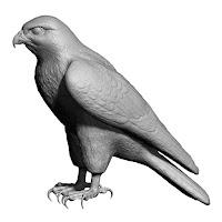 3D model falcon bird basic shape